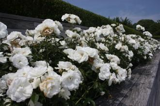 Garden35