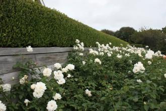 Garden65